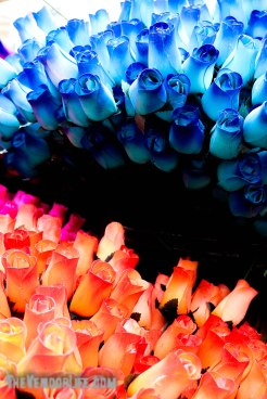 Pecan Street Festival-1127-20180922